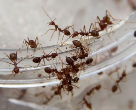 Borba Sa Mravima I Drugim Insektima U Kući