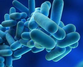 Prevencija I Zaštita Od Legionarske Bolesti